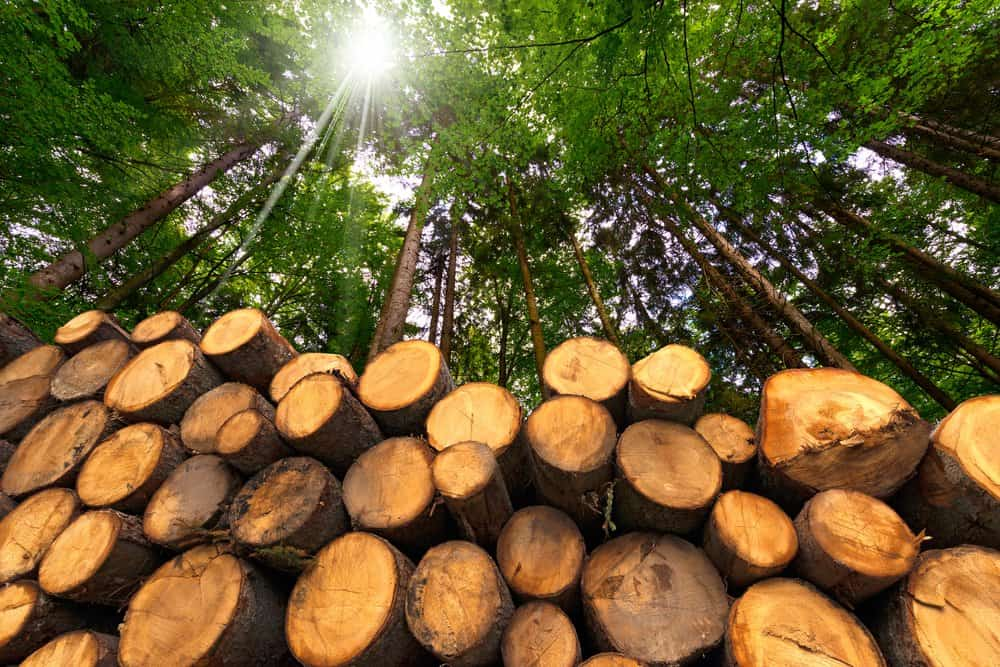 ¿Qué tipos de madera existen en la construcción de viviendas?